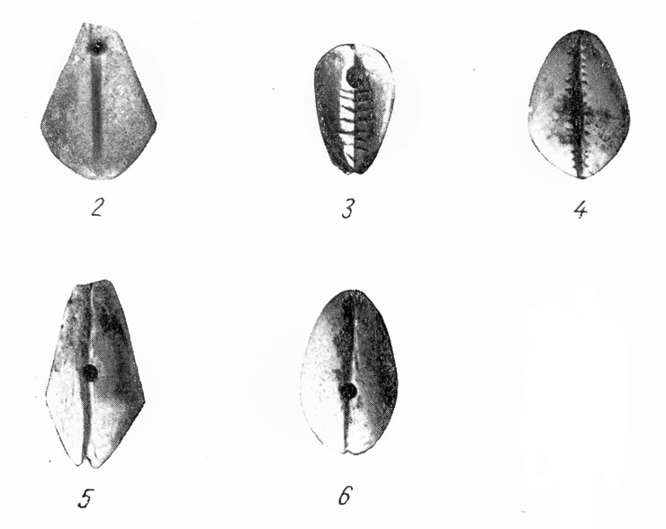 Рис. 2-6. Каменные подражания раковинам каури.